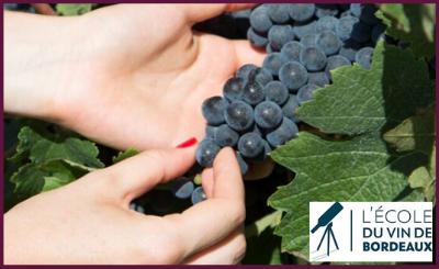 L'école du vin de Bordeaux